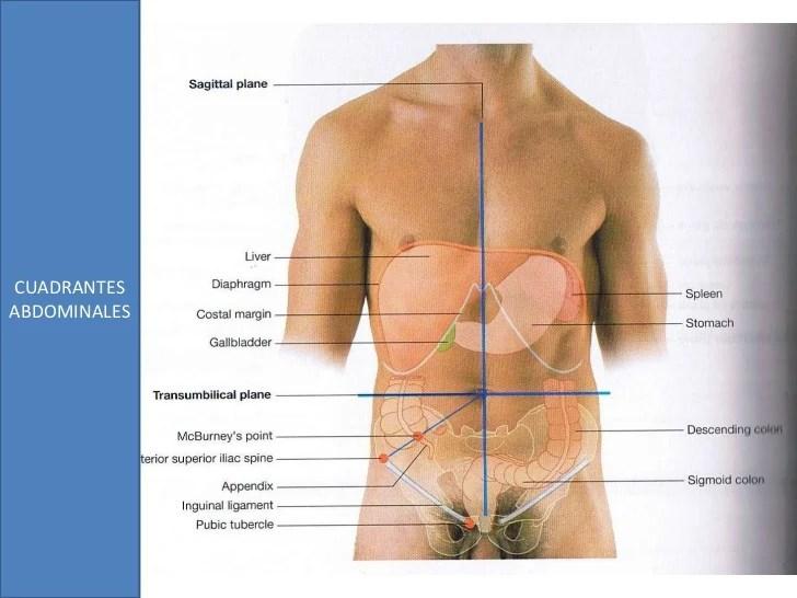 Anatomía de superficie del abdomen | Anatomía de superficie