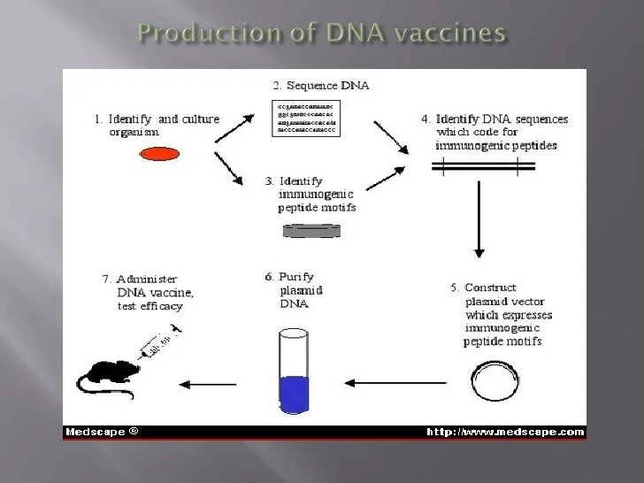diagram of how vaccines work spal cooling fan wiring 5. vaccine technology