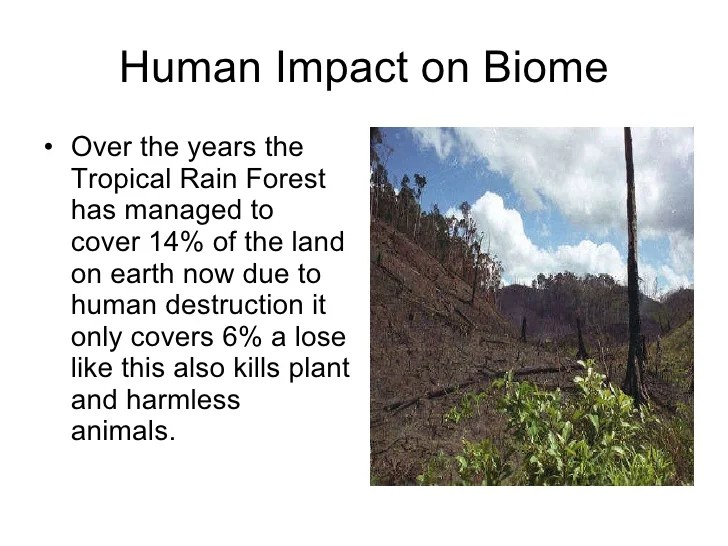 Tropical Rainforest Biome Human Impact