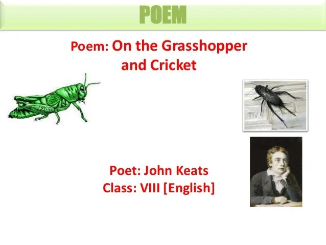 8 grasshopper and cricket