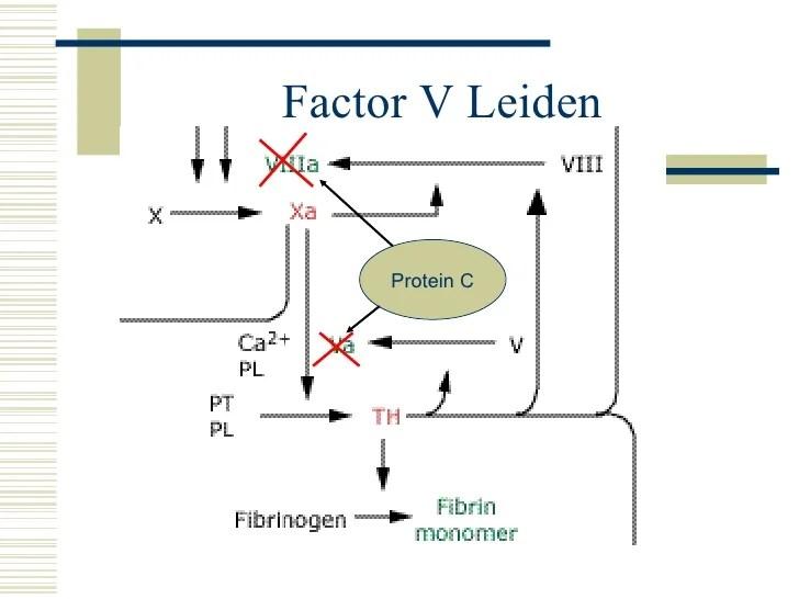 Cp Rounds Factor V Leiden & Pregnancy