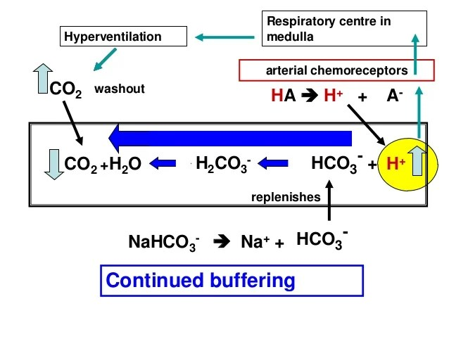 Diagram Of Nahco3 Acid Base Balance And Primary Disturbances Basic Concepts