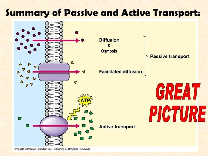 Active Transport Vs Passive Transport