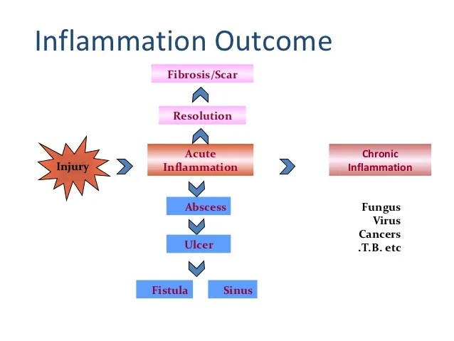 Acute inflammation optimetery lect 2