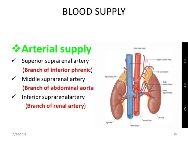 Adrenal gland Anatomy and histology