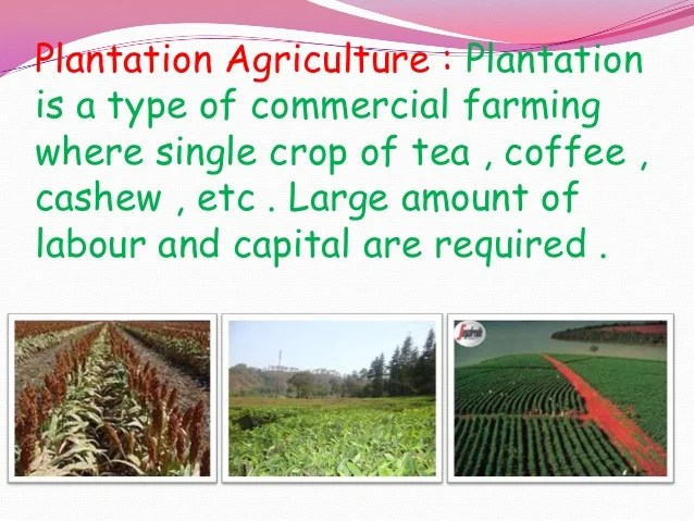 Fajalah Kinara Plantation Plantation Agriculture Definition