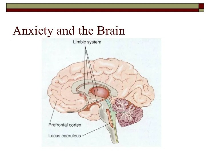 the anatomy of anxiety diagram 2005 keystone cougar wiring dealing with in classroom 23 doing anxious