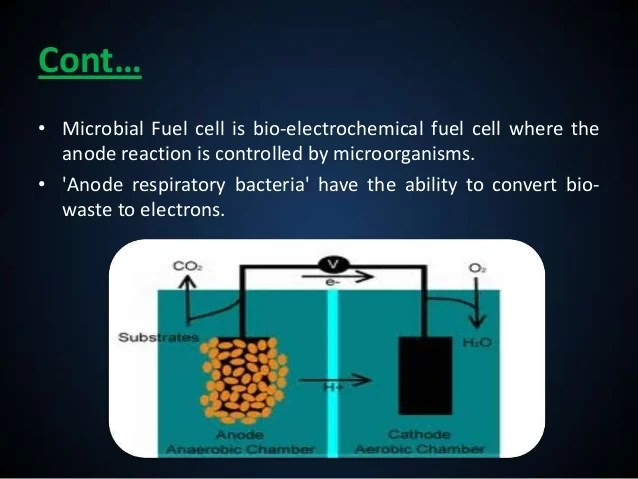 Energy From Algae Using Microbial Fuel Cells