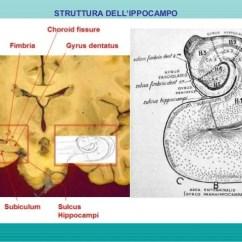 The Human Brain In Photographs And Diagrams Ibanez 3 Pickup Wiring Diagram Anatomia Circuiti Memoria