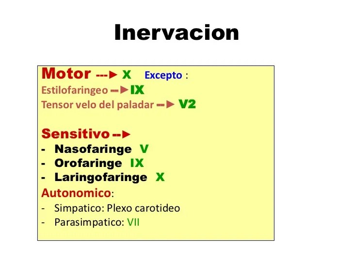 Nasofaringe, orofaringe y laringofaringe | Tecnicas de ...