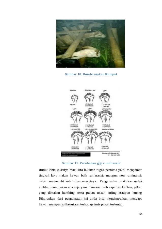 Anatomi hewan