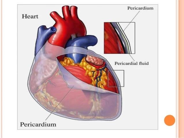 Superior Sulcus Lung Anatomy