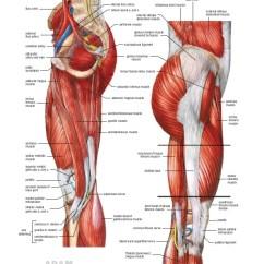 Medial Lower Leg Muscles Diagram 1994 Ford Explorer Speaker Wiring Anatomy Atlas 25 Common Fibular Nerve Lateral