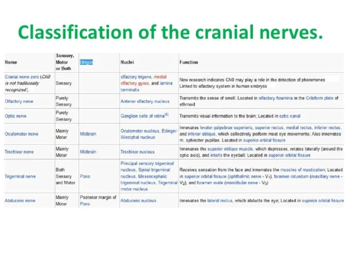 Cranial Nerves And Their Sensory Motor Autonomic Functions ...