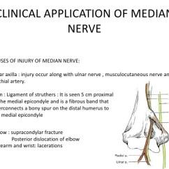 Radial Nerve Diagram 1992 Club Car Ds Wiring Anatomy Of Radial,median &ulnar