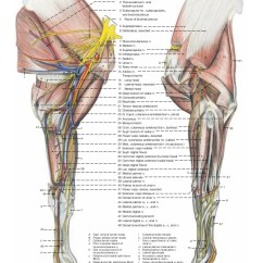 Horse Anatomy Diagram Muscles Gm Parts Diagrams And Part Numbers Of The
