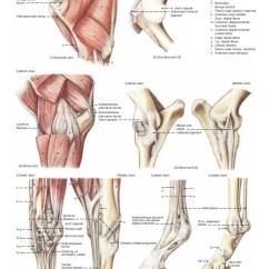 Cow Skeleton Bones Diagram 2006 Nissan Pathfinder Radio Wiring Anatomy Of The Horse