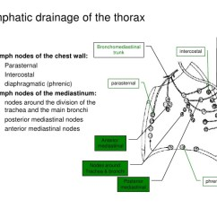 Posterior Cervical Lymph Nodes Diagram Nissan Navara D40 Trailer Plug Wiring Anatomy Of The Lymphatic System