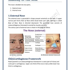 Diagram Of The Nose And Its Functions T568a Wiring Anatomy Surgicomed Com