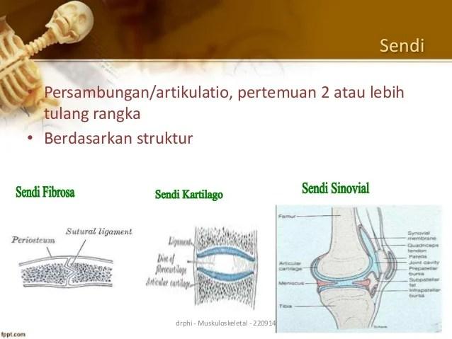Fisiologi menipakan bagian dari kanius ilmu dasar yang mencakupi bidang matematika, fisika, kimia, dan biologi. Anatomi Fisiologi Sistem Muskuloskeletal