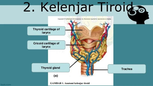 Anatomi Fisiologi Pankreas