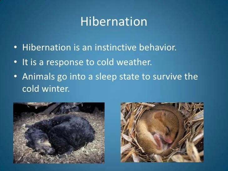 diagram types of feathers free tree powerpoint animal adaptations introduction