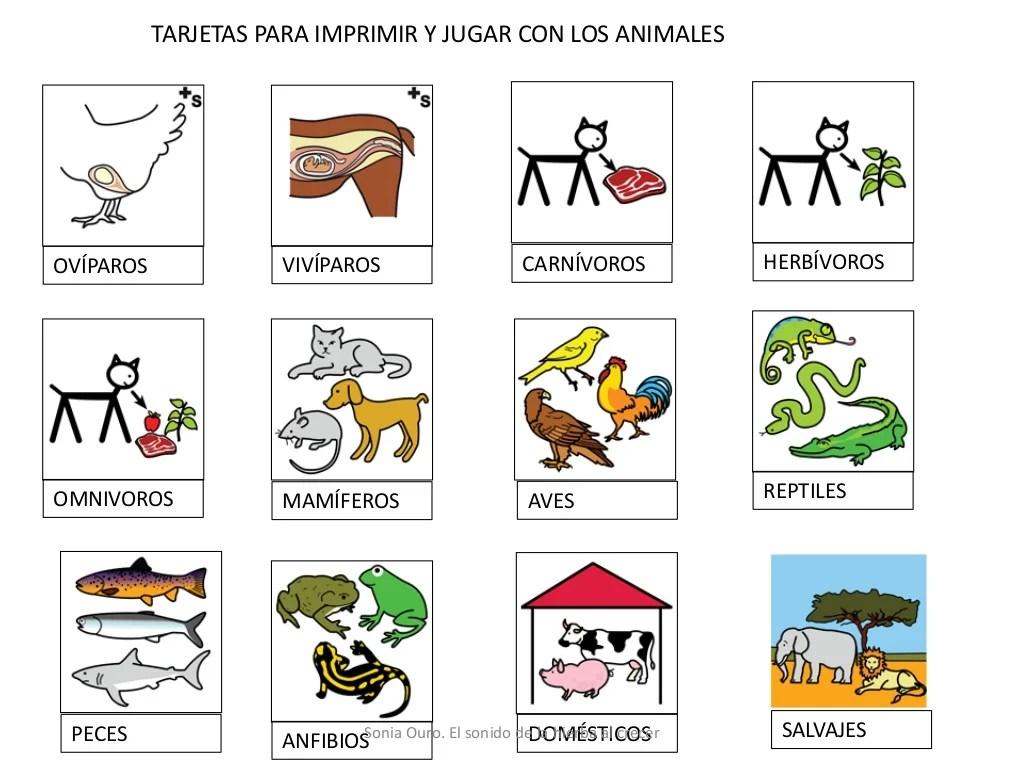 Dibujos De Animales Homnivoros Imagui