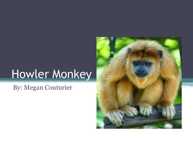 Howler Monkey Predators
