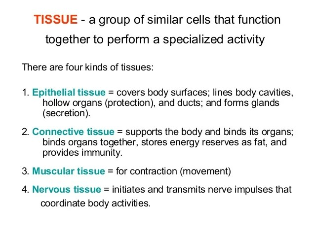 Animal Tissues Epithelial & Connective