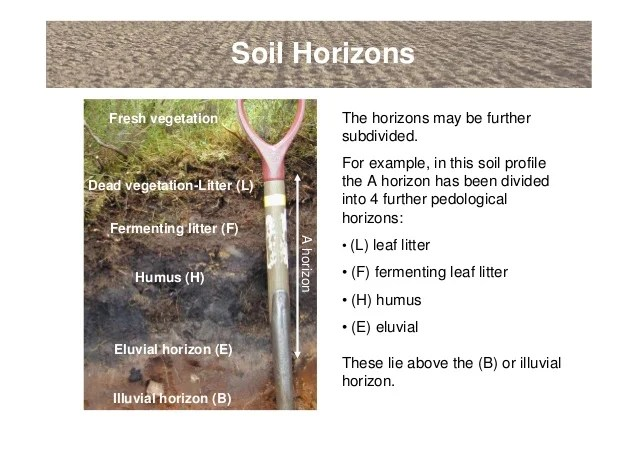 horizon diagram soil formation simplicity mower deck belt an introduction to soils and terminology shows simplified horizons 4