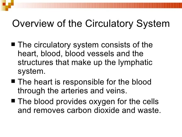 A&P Chapter 25 The Circulatory System