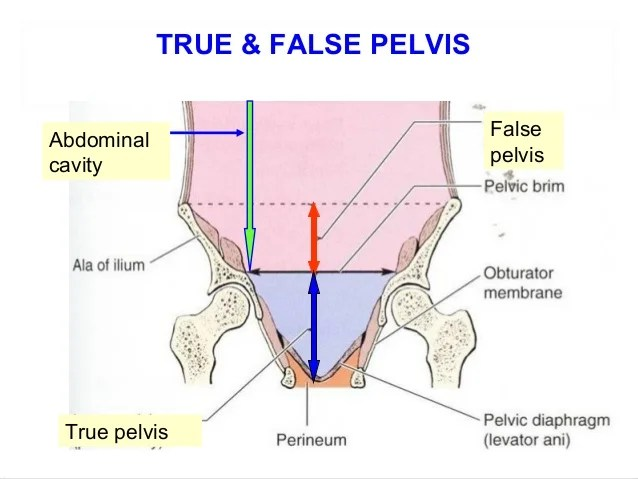 Pelvic Anatomy & Physiology (Normal Anatomy of Female