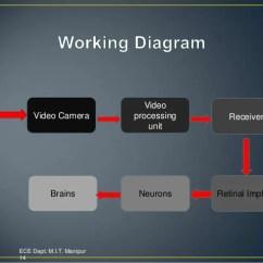 Diagram Of Artificial Eye Ez Go Rxv 48 Volt Battery Wiring M I T Manipur 13 14