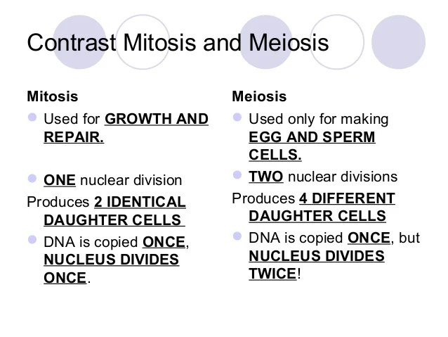 stages of mitosis and meiosis diagrams 2002 mazda protege5 engine diagram background notes