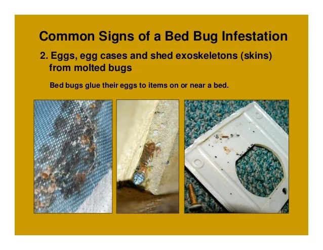 How to Sleep Tight and Not Let the Bed Bugs Bite