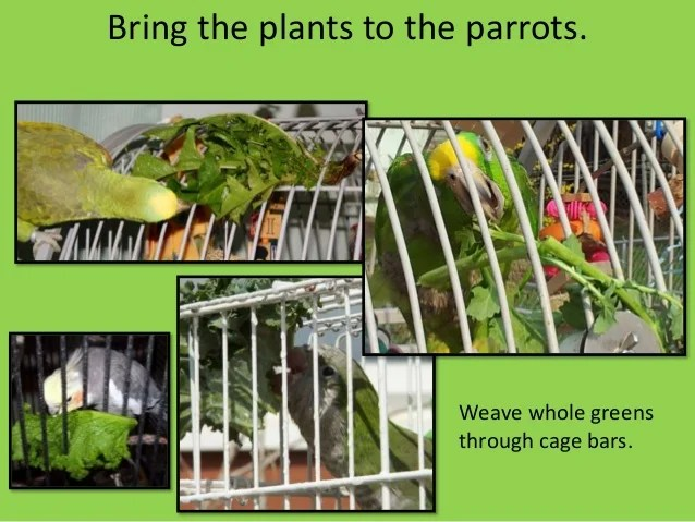 Benifits Of Plants For Parrots