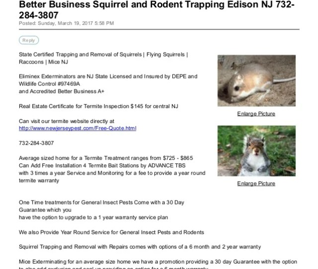 Better Business Squirrel And Rodent Trapping Edison Nj