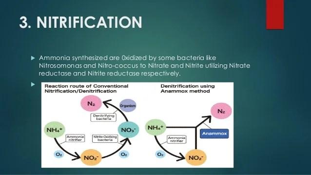 Biochemistry of biological nitrogen fixation
