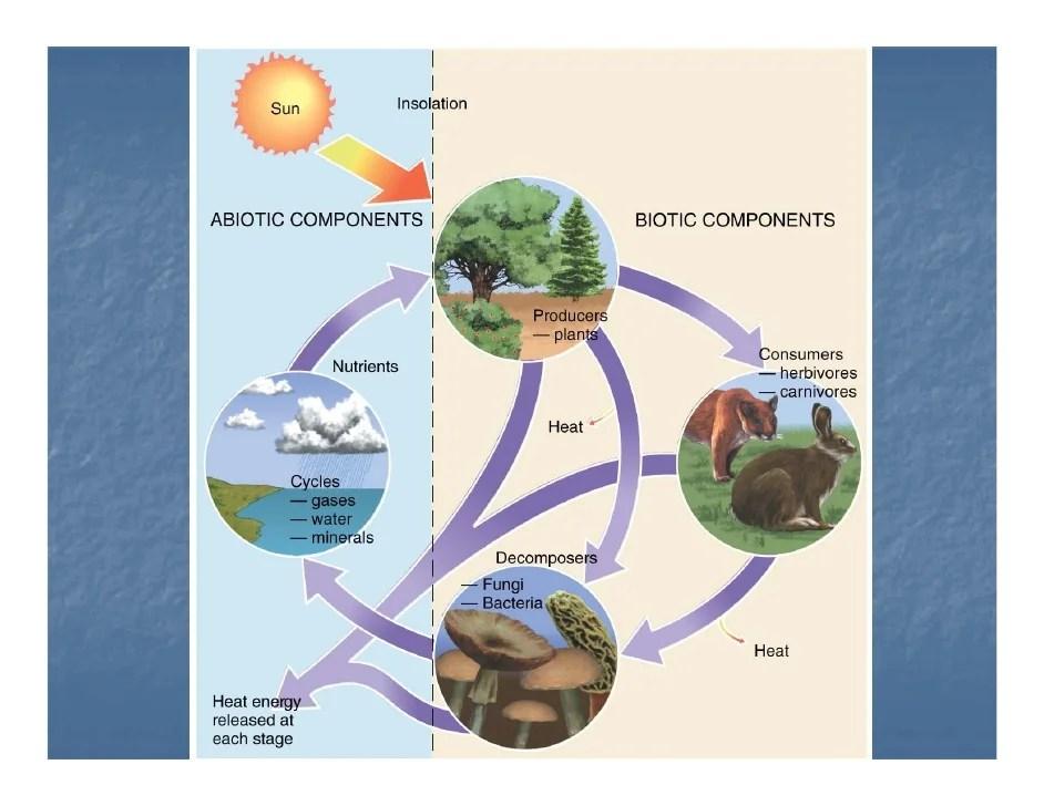 Diagram Of Nitrogen Biogeography