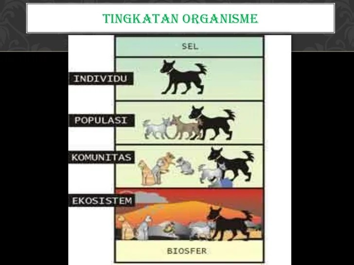 Biologi  Ekosistem