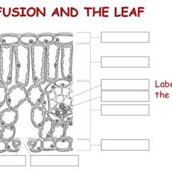 Virus Diagram Worksheet Multiple Pot Light Wiring Biological Examples Of Diffusion
