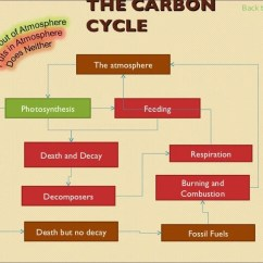 The Carbon Cycle Diagram Gcse Mustang Wiring Biology Revision Feeding Decomposers Death But No Decay And Photosynthesis Burning Combustion Respiration Atmosphere Fossil Fuels Back