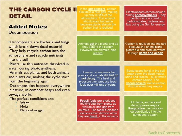 the carbon cycle diagram gcse 2008 yamaha r6 ignition wiring biology revision
