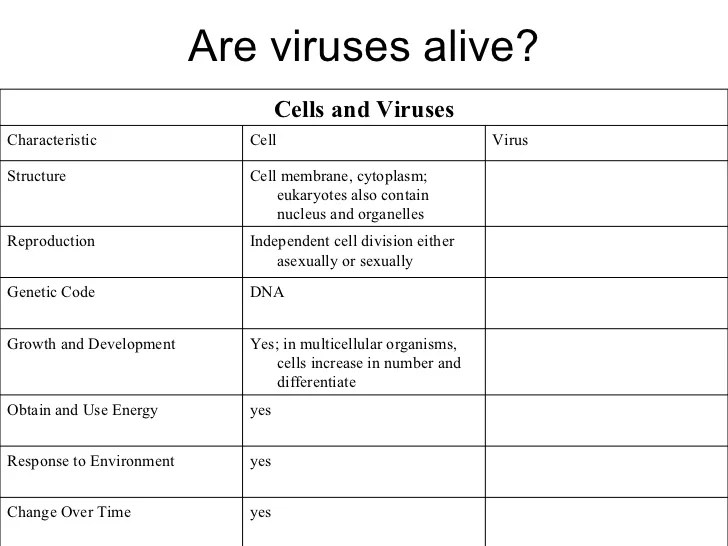 Virus And Bacteria Worksheet. Worksheets. Ratchasima