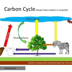 The Carbon Cycle Diagram Gcse Honeywell Thermostat Rth221b1000 Wiring Biology Revision For B1 Shows How Is Recycled Co2 In Airburning Photosynthesis Compounds Being Decayed By Microorganisms Fossil Fuels