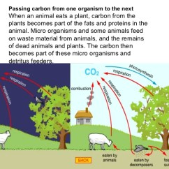 The Carbon Cycle Diagram Gcse Vectra Abs Wiring Important Helpful Biology Revision Notes Must See 35 Passing