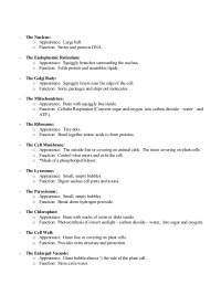 7 2 Cell Structure Worksheet Answers - Breadandhearth