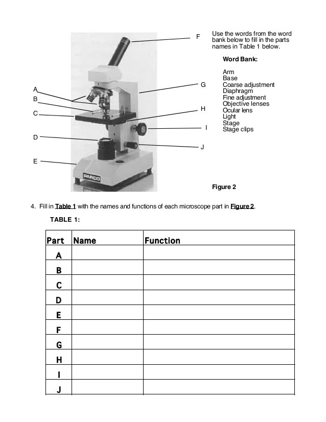 The Compound Microscope Worksheet wiildcreative – Microscope Parts and Functions Worksheet