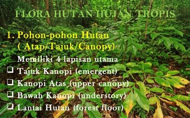 Gambar Sistem Ekologi 21 Kepentingan Hutan Hujan Tropika