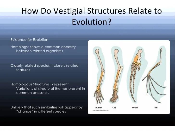 Vestigial Structures Human Examples